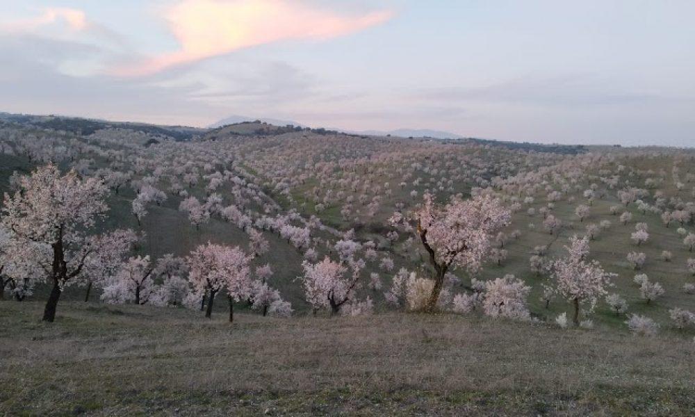 Almeria a vista de Drone, nuevo canal en YouTube de Javier Ávalos